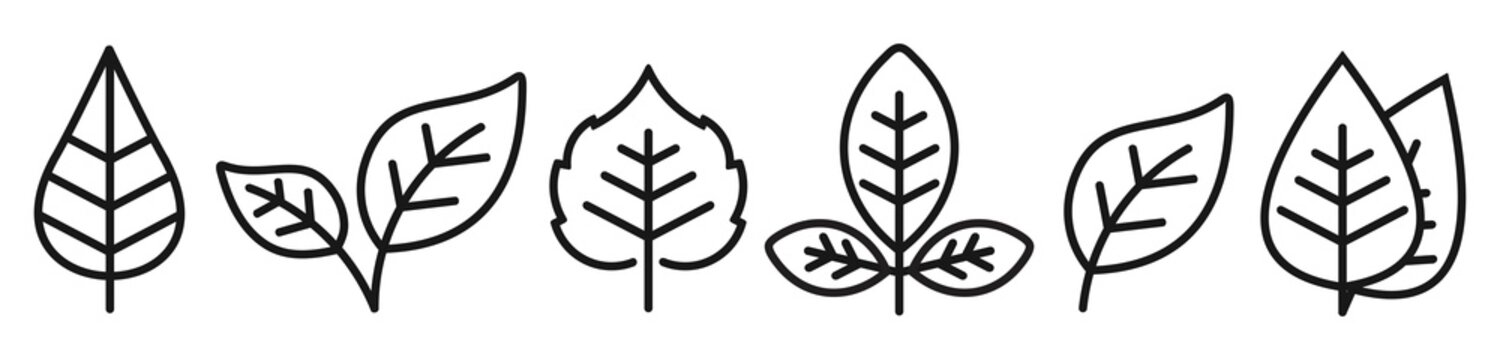 leaf line icon set, Leaf simple symbol, Vector illustration