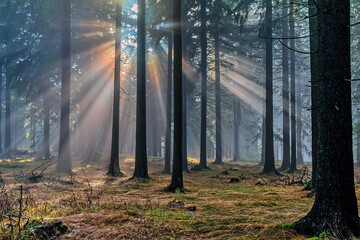 Mystischer Nebel im Thüringer Wald