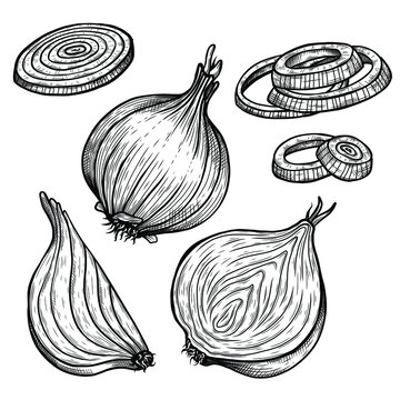 Vector sketch illustration of onion set drawing isolated on white. half, whole and cut rings. Engraved style. Ink. natural business. Vintage, retro object for menu, label, recipe, product packaging