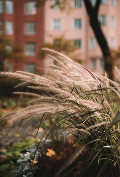 ears of wheat in a garden surrounded by apartments