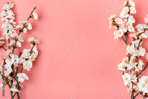 Sprigs of the apricot tree with flowers on pink background. Place for text. The concept of spring came, mother's day, 8 march Top view. Flat lay Hello march, april, may