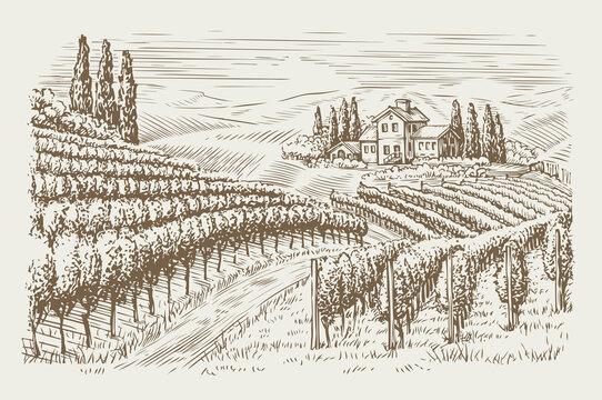 Vineyard landscape vintage. Hand drawn sketch vector illustration
