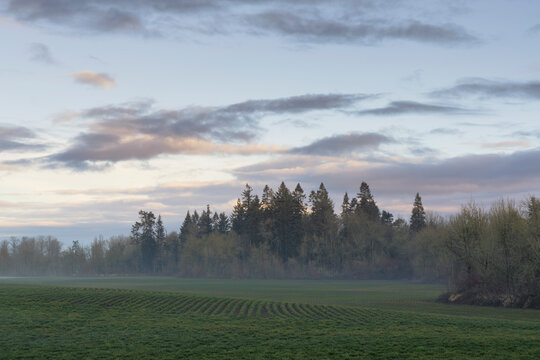 Fog over meadow with forest in background