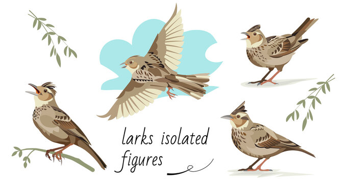 Flying, singing, standing, sitting on a branch larks. Isolated vector figures