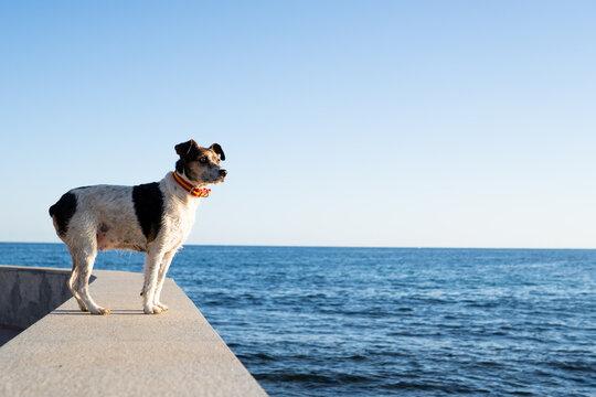 Dog enjoying the sea view