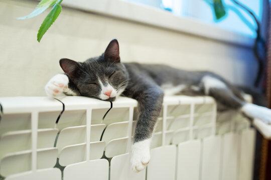 cat sleeping on heating radiator