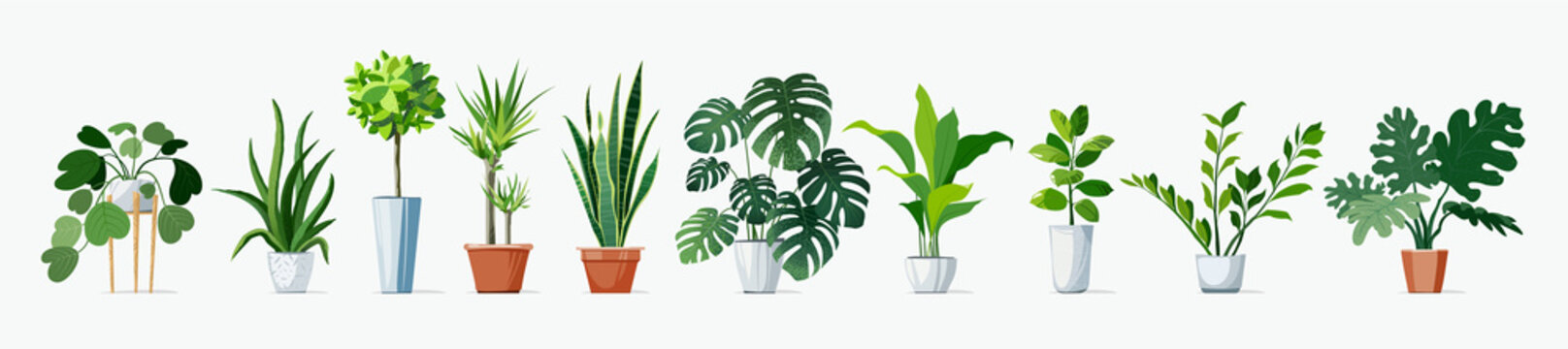 Home Plants set, in pots. Exotic Monstera and other decoration green planting