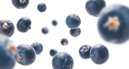 Juniper berries levitate on a white background