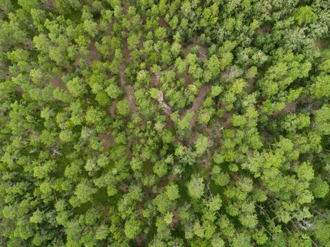 Aerial Photograph of the New Jersey Pine Barrens