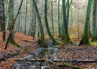 A December morning in a deciduous forest in Poland