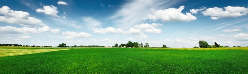 Green field under the clear blue sky with cumulus clouds. Idyllic rural scene. Picturesque panoramic landscape. Road trip, travel destinations, vacations, ecology, ecotourism, environment, greenery