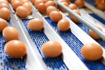 Chicken eggs move along a conveyor in a poultry farm. Food industry concept, chicken egg production. High quality photo Fotobehang