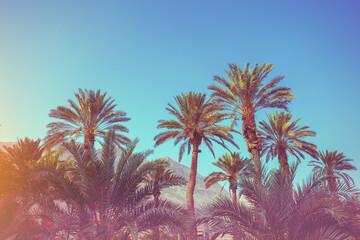 Tropical palm trees against mountains. Tropical landscape