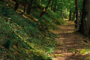 un chemin dans une forêt. Un sentier dans une forêt.