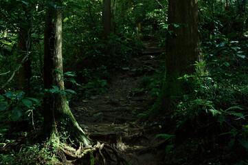 高尾の森の植物(巨木・森林浴・苔・緑)高尾山・東京都・日本