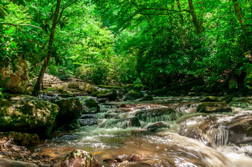 A closeup shot of a river with cascades in a forest Wall mural