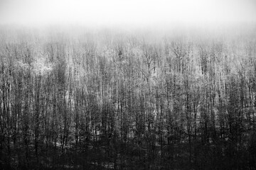 Beautiful winter landscape in the european forest. Snow on the trees. Enigmatic and amazing winter nature in black and white. Frosted trees branches.