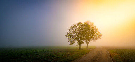 A horizontal shot of beautiful trees in autumn fog, the scenic landscape at sunset
