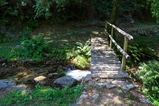 wooden bridge in the forest full of trees and river with footpath.