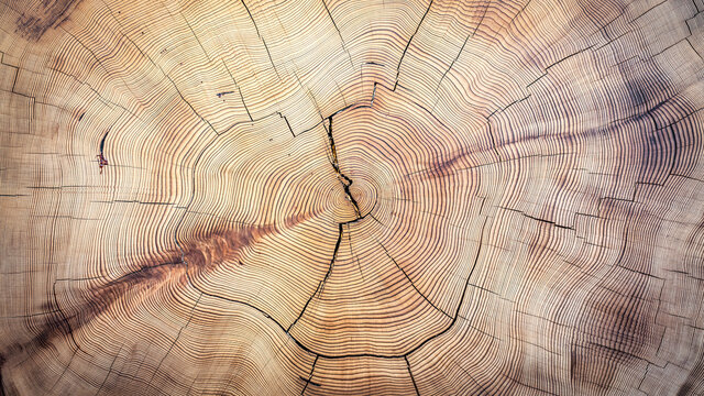 Close up photo of cut rings texture of a tree