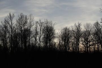 Fototapeta Las zimą krajobraz popołudniu