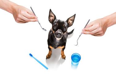 dental toothbrush dog