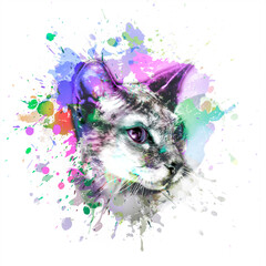 sphynx cat in colorful paint splashes