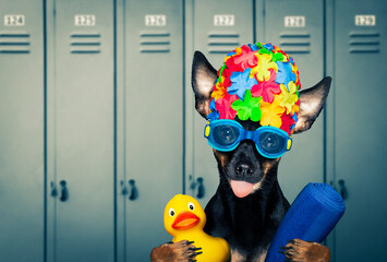 dog swim cap and goggles in locker room
