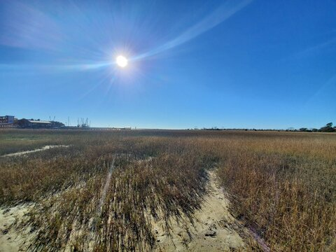 sweetgrass field