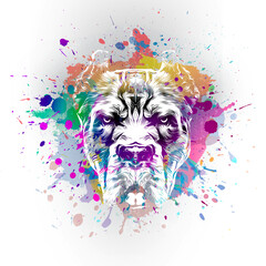 angry bulldog in colorful paint splashes