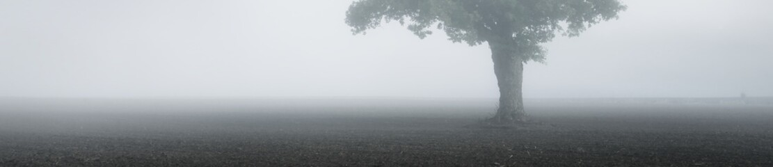 Panoramic view of the mysterious forest and field in a fog. Mighty oak tree close-up. Texture, background, wallpaper. Atmospheric landscape. Nature, ecology. Monochrome image, copy space