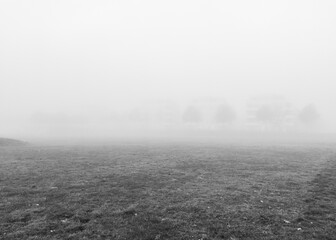 Autumn landscape. Foggy morning. Black and white. Mobile photography.