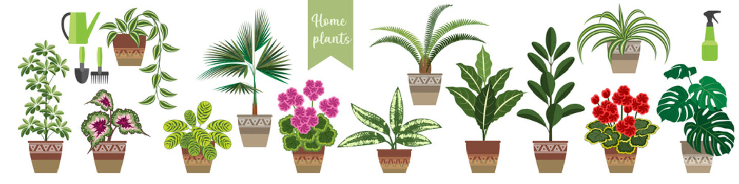 set of popular house plants in a horizontal format. thirteen flowering and ornamental plants and care items. stock vector illustration. EPS 10.