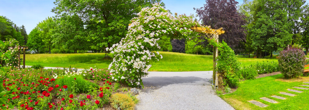 Beautiful park with flower beds and roses in a panoramic format.