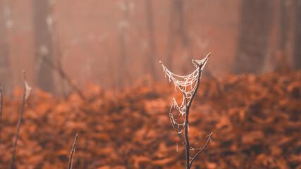 Oszroniona pajęczyna na gałęzi