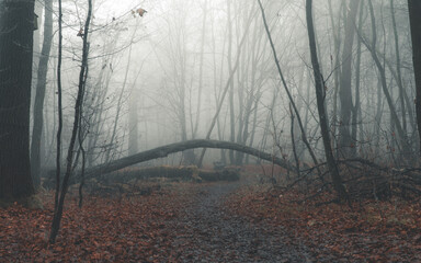Las Wolski w Krakowie we mgle