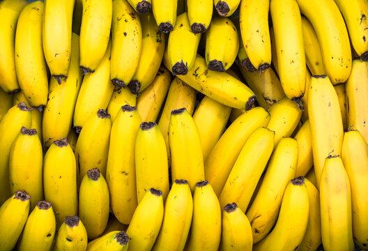 Fundo com muitas bananas maduras