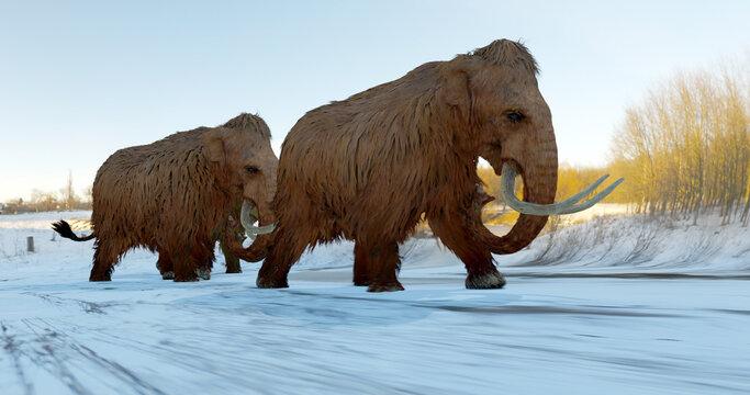 Woolly Mammoths Walking In Snowy Field