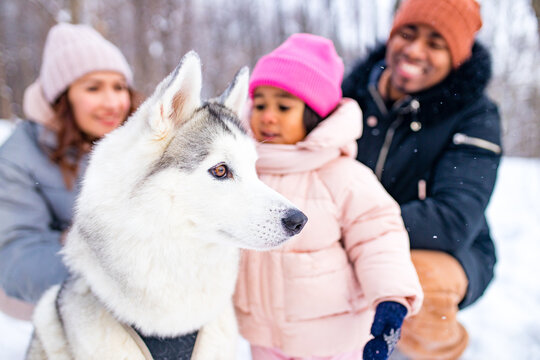 mixed race family in threesome spending new year holidays in park with their husky dog