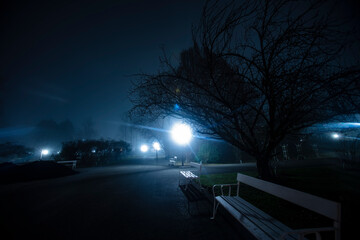 misty night in the city park  Fotomurales