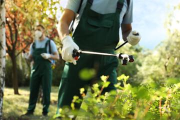 Obraz Workers spraying pesticide onto green bush outdoors, closeup. Pest control - fototapety do salonu