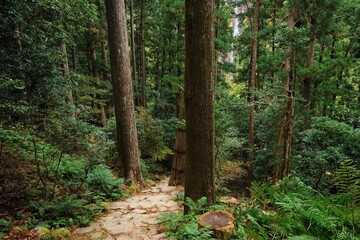 Pathway in the forest at Kumano Kodo, Daimonzaka Slope in Wakayama, Japan