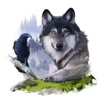 Grey wolf and black raven on the rocks