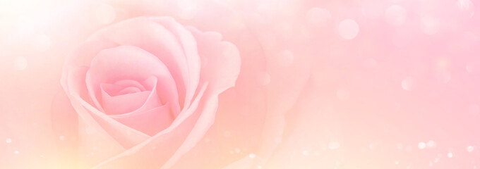 Pink Rose flowers with blurred sofe pastel color background for love wedding and valentines day.