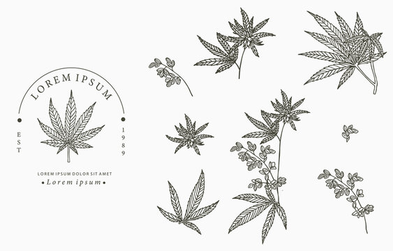 cannabis collection.Vector illustration for icon,sticker,printable