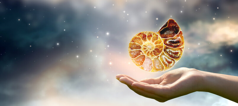 Human hand holding ammonite fossil in universe against space sky and shining stars background. Symbol of eternity, extinction and evolution, time concept.