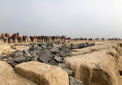 Horse guides wait for tourists at the Giza pyramids plateau, in Giza