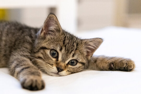 Portrait of a cute little kitten lying on the bed  at home