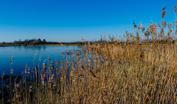 January 2021, winter is here, the blue marshes are frozen, the common reeds have taken on their winter colors on a superb day, not far from Challans,Vendée, France.