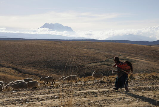 A woman shepherds sheep while the Illimani mountain is seen in the background, near El Alto outskirts of La Paz